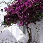 Guide me in Greece tours - Mykonos